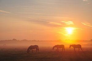 Paarden in de ochtendnevel