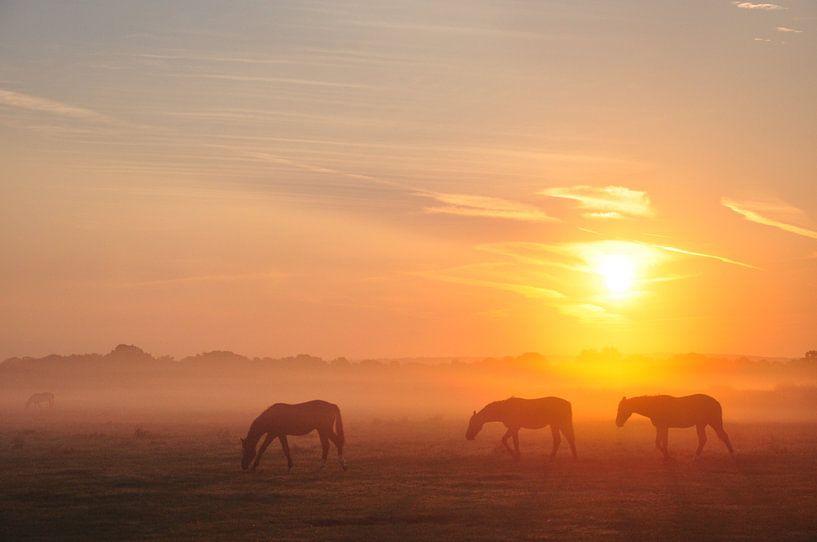 Paarden in de ochtendnevel van Lex Schulte