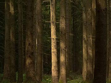 Sonniger Kiefernwald in den Ardennen von Kristof Lauwers