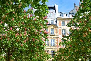 Roze kastanjebloesem in Parijs van Ingrid de Vos - Boom