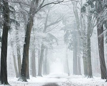 Wind en sneeuw stormen. van
