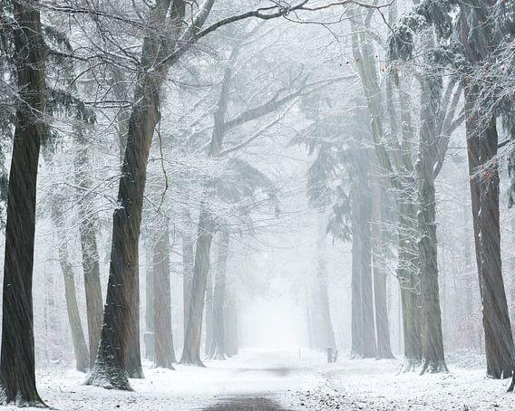 Wind en sneeuw stormen. van Fabrizio Micciche
