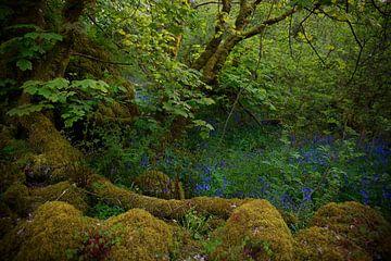 Fairytale in Irland 1 von Bo Scheeringa