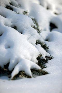 Makrofoto | verschneite Bäume in ländlicher Naturkulisse | Fine Art Photo Print | Poster von Karijn | Fine art Natuur en Reis Fotografie