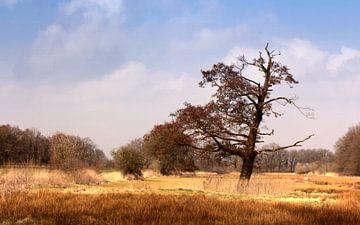 Autumn van Wim Popken