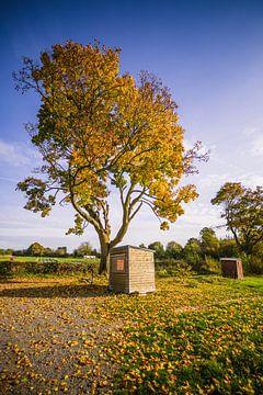 Warme herfstboom in Frankrijk von Martin Frunt
