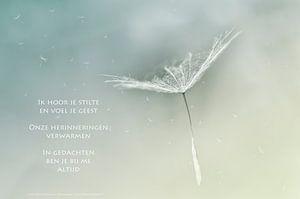 Pluisjes gedragen door de wind