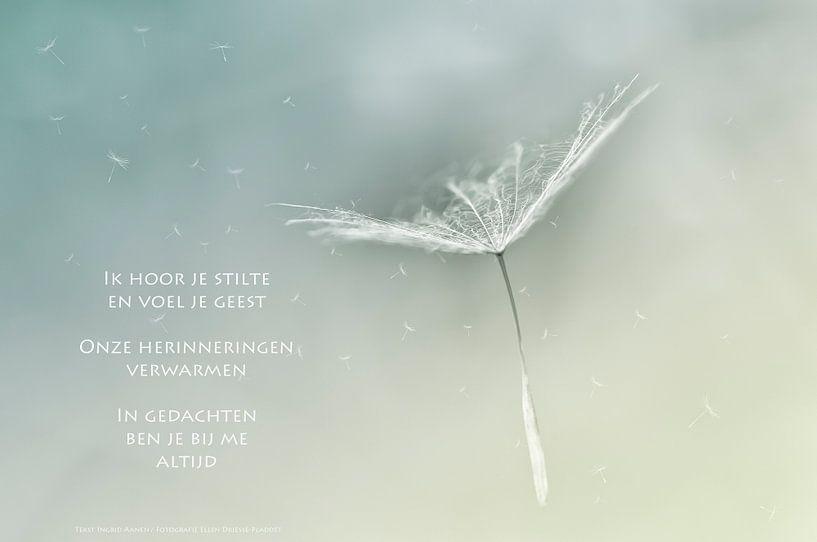 Pluisjes gedragen door de wind van Beeld en Poëzie