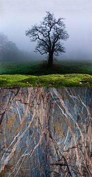 Baum-Moos-Stein von Hannie Kassenaar