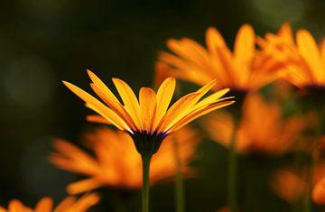 Blütenmakro von Thomas Jäger