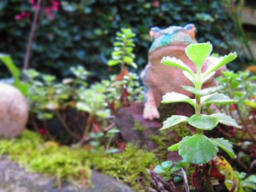 De kikker die als dier de tuin in kijkt op de vijver sur Wilbert Van Veldhuizen