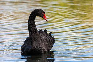 Zwarte veren van Tienke Huisman