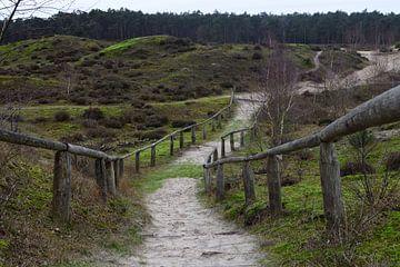 Ein Weg über die Dünen von Gerard de Zwaan