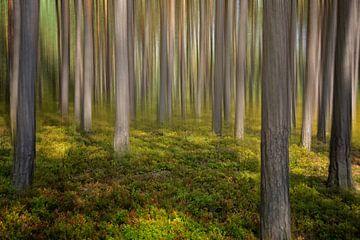 Wald von Claudia Moeckel