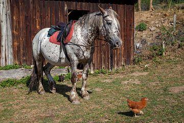 Witte schimmel (paard) met zadel, rood dekje en kip in zuid Frankrijk van Joost Adriaanse