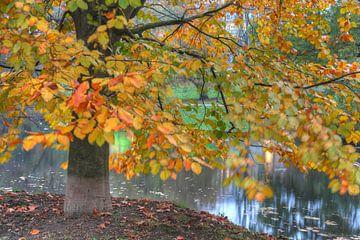 Un arbre en automne