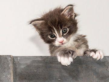 Kitten serie VI van Rob Smit