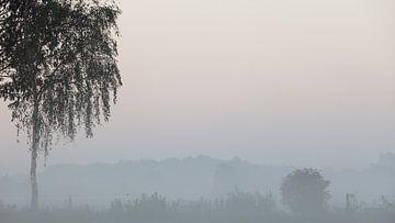 Birke im Morgennebel von Dick Doorduin