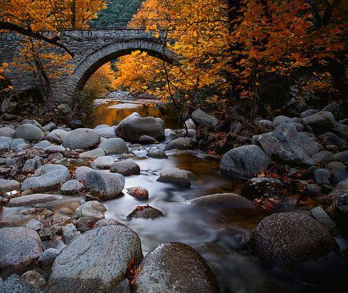 herfst stemming van Konstantinos Lagos