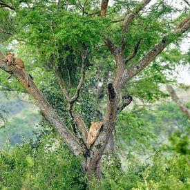 T(h)ree Lions von Richard Guijt