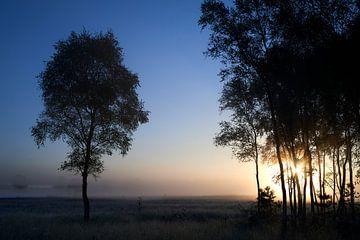 Sonnenaufgang erhellt den Wald an der Noorderheide von Jenco van Zalk