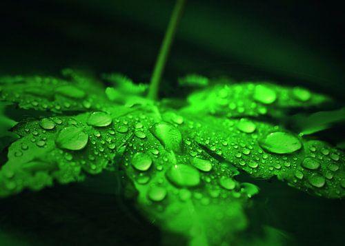 Ahornblatt mit Wassertropfen von Gabi Siebenhühner