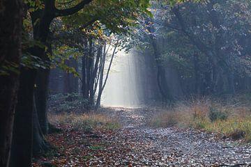 pad in de herfst mistige bos tussen bomen van Olha Rohulya