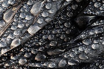 Dauwdruppels op vogelveren. van Wil Leurs