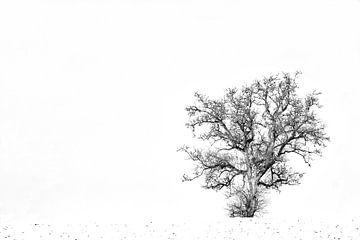 Boom in de sneeuw von Wilma Overwijn