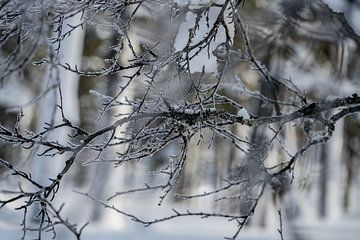 Uhro Kekkonen N.P. Lapland - Woud van Martin Boshuisen - More ART In Nature Photography