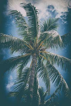 Palmboom in Miami von Aiji Kley