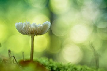 Betoverende paddenstoel (groene versie)