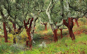 Kurkeiken in Extremadura van Jacques van der Neut
