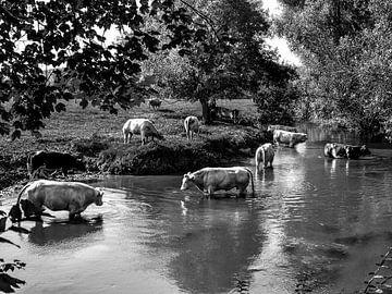 Badende koeien von Leo Langen