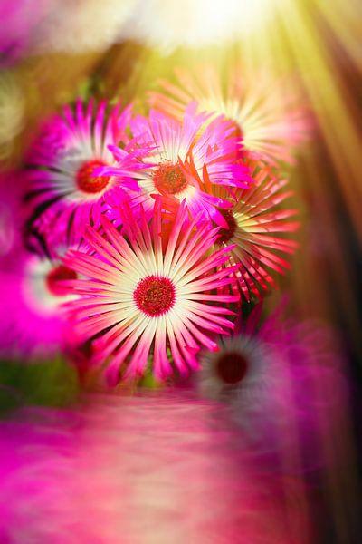 Sonnenanbeter pink van Dagmar Marina