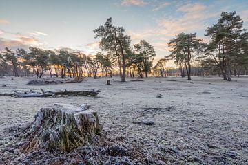 Kalter Morgen von Max ter Burg Fotografie