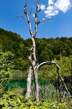 Toter Baum in der Nähe eines Sees von Jeroen de Weerd