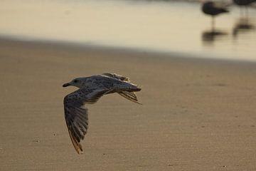 In vogelvlucht over het strand van Simone Meijer
