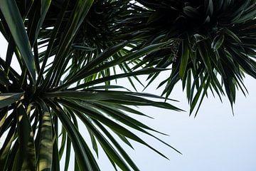 palmtree van Nienke Stegeman