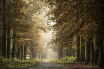 Op een herfstachtige mistige morgen van Jos Erkamp