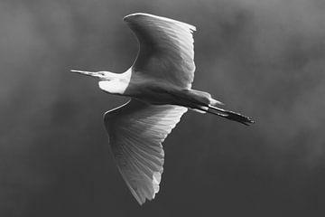 Witte Reiger van Lynlabiephotography