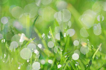 Tropfen im Gras von Corinne Welp