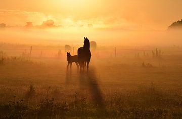 Friesenpferde bei Sonnenaufgang von Jitske Van der gaast