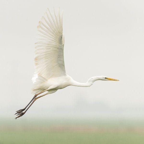Zilverreiger vliegt weg van Erik Veldkamp