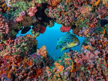 Doorkijk in het koral van victor van bochove