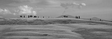 Monochrome Toskana im Format 6x17, Baumreihen in San Quirico D'Orcia II von Teun Ruijters