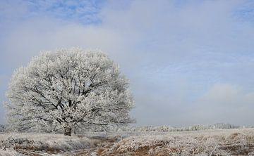 Winters aanzicht von Marcia Bergsma