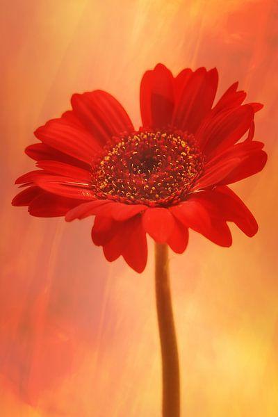 Flaming beauty van LHJB Photography
