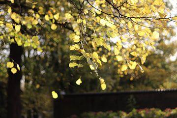Bladeren in zonlicht van Laura Marienus