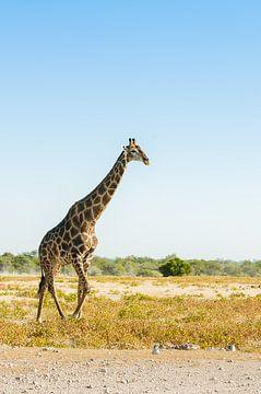 Giraffe und Profil in Namibia von Kirstin Kraaijveld